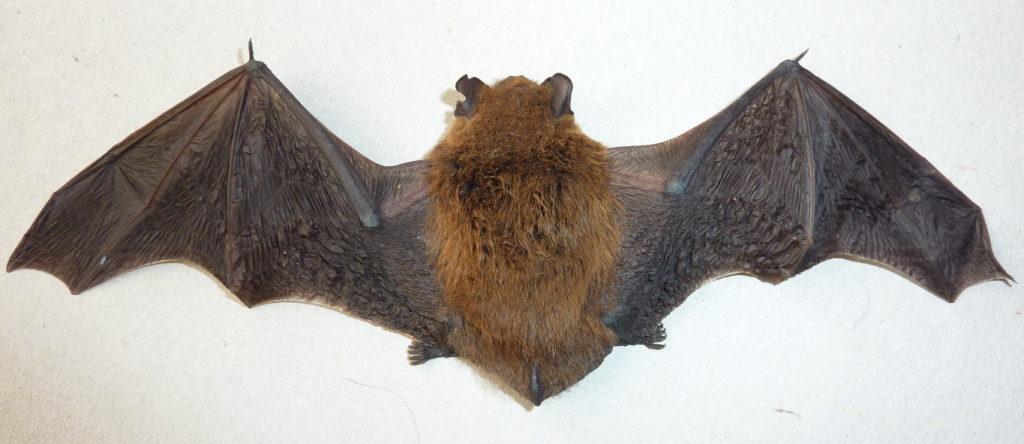 0502-bat
